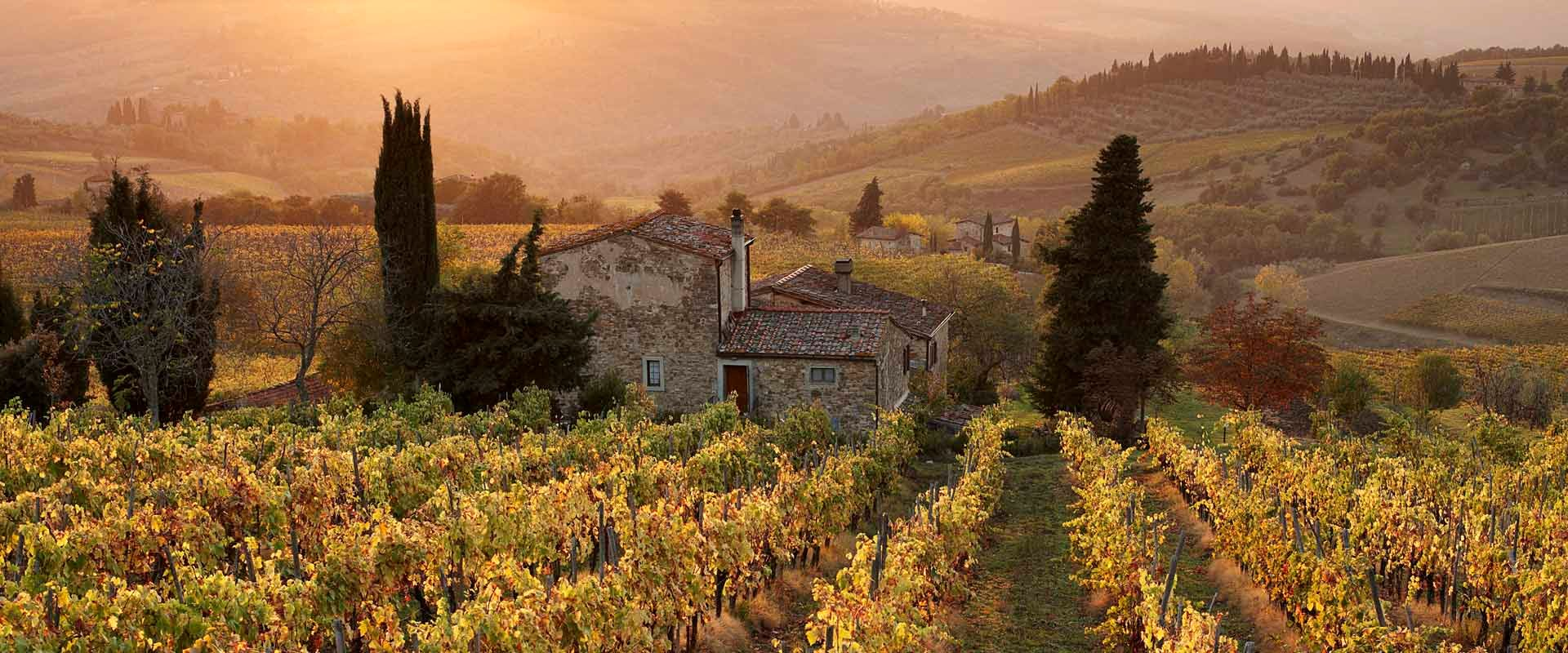 Farmhouse in vineyard at sunset, Panzano, Chianti, Tuscany, Italy